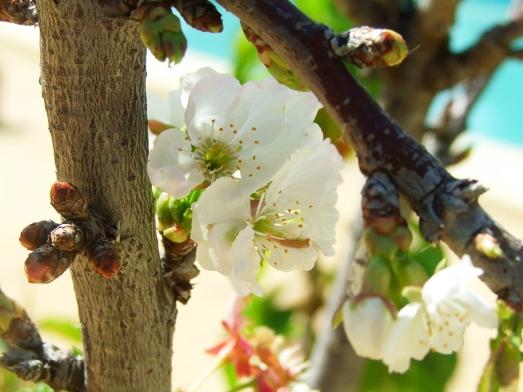 pollinated tree